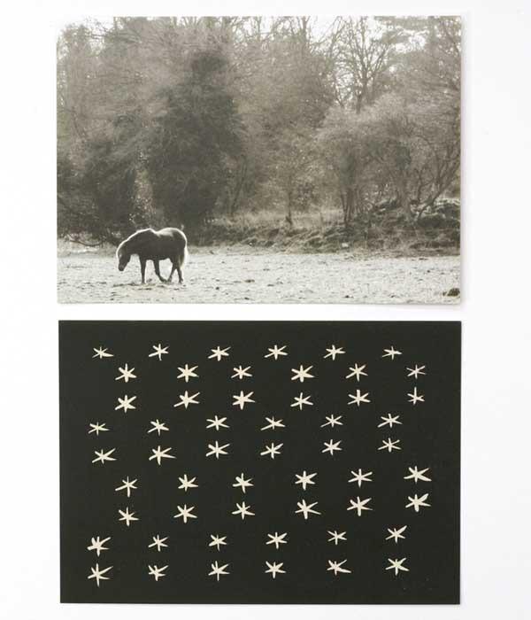 Postcard Stars & Horse