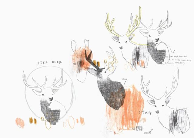 Illustration Sika Deer by PinkPaperCircus